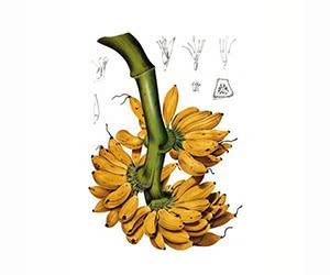 Free L'Artisan Parfumeur Bana Banana Scent