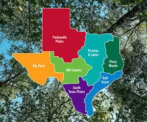 Free Texas Travel Guide
