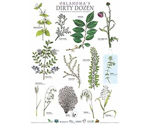 Free Oklahoma's Dirty Dozen Wall Poster