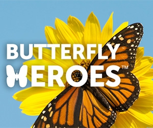 Free Wildflowers Seeds From National Wildlife Federation