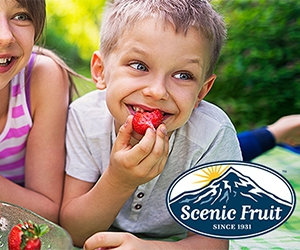 Free x2 Smoothies From Scenic Fruit Company