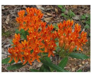Free Flower Seeds From Alt National Park Service