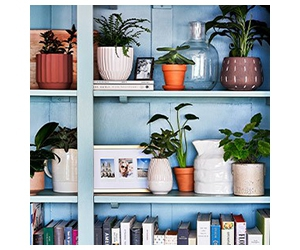 Learn How To Choose A Houseplant At Amazon