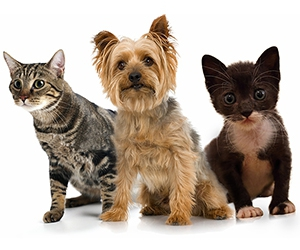 Free Dog And Cat Food Sample Bag From The Pet Pantry