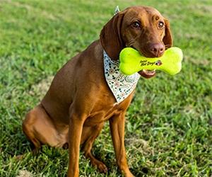 Win A&W Dog Bone